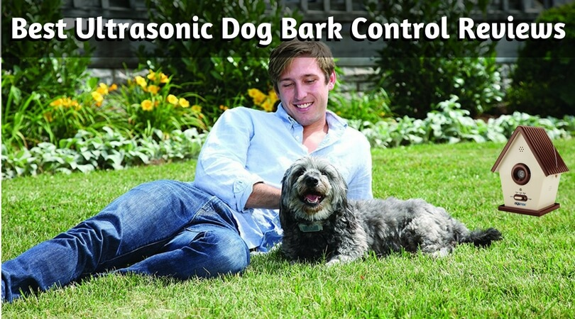 best dog bark control