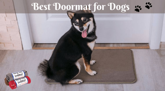 Best Doormat for Dogs