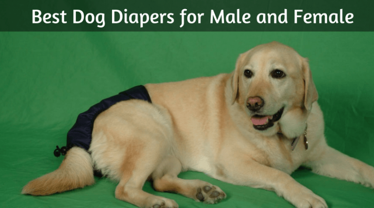 Make Your Own Dog Diapers