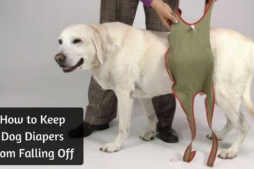 How-to-Keep-Dog-Diapers-from-Falling-Off