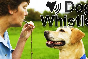 best silent dog whistle