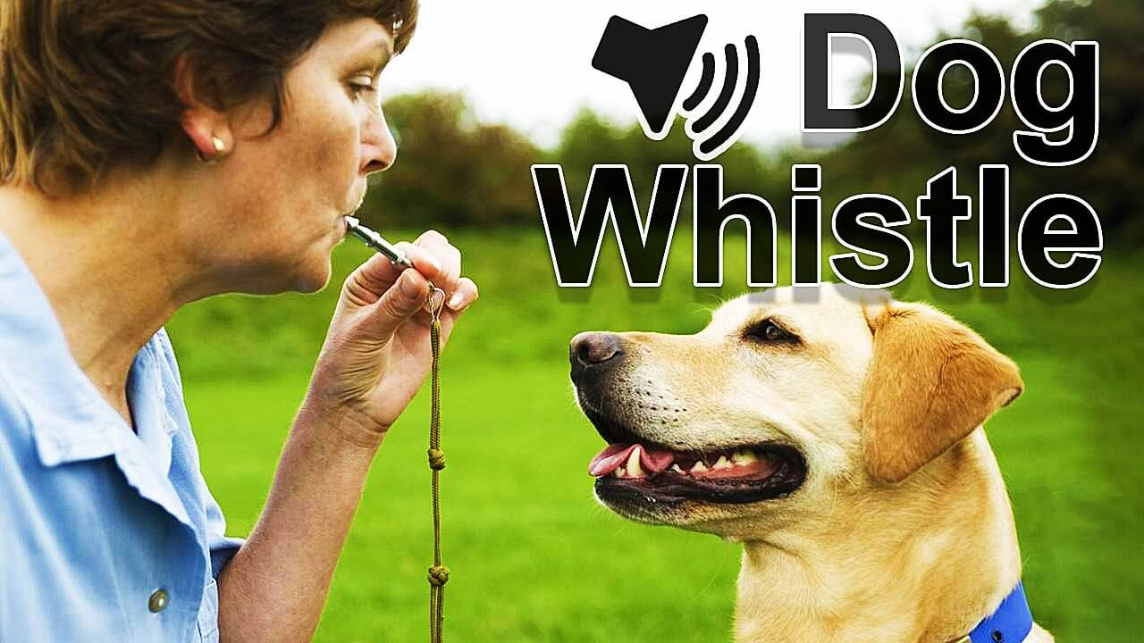 Best Silent Dog Whistle to Stop Barking | Check Reviews