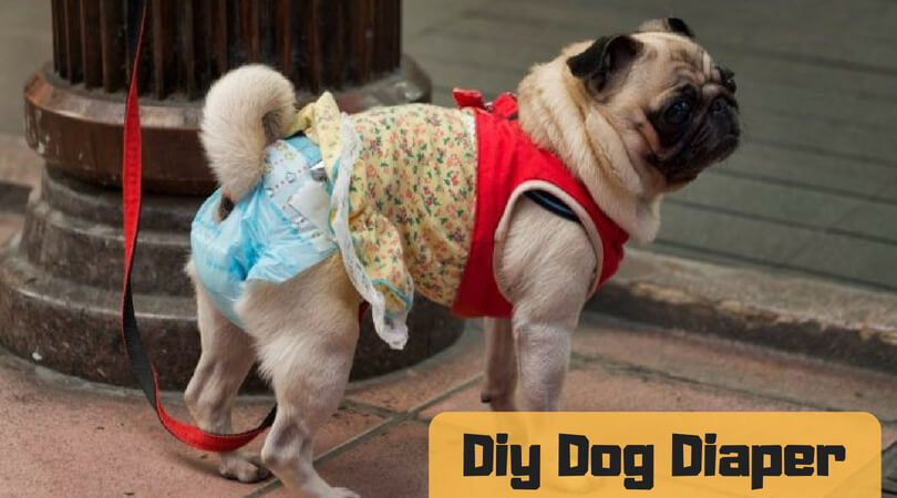 DIY Dog Diaper: Make Diaper Alternative At Your Home