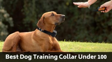 Best Dog Training Collar Under 100