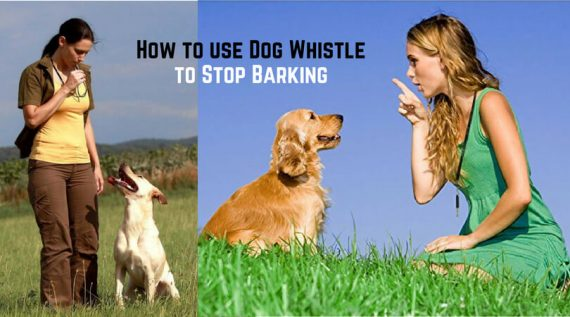 dog whistle training to stop barking