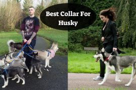 Best Collar For Husky