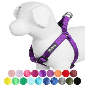 Blueberry Pet Classic Solid