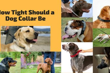 How Tight Should a Dog Collar Be