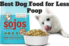 Best Dog Food for Less Poop