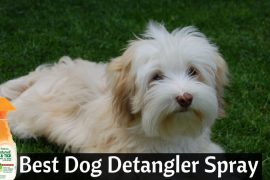 Best Dog Detangler Spray