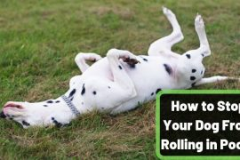 How to Stop Your Dog Rolling in Poop