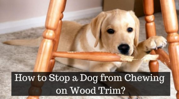 How to Stop a Dog from Chewing on Wood Trim