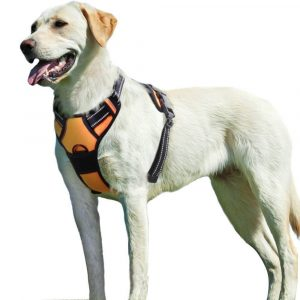 Eagloo No Pull Harness with Front Clip