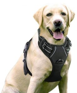 RABBITGOO No Pull and Adjustable Dog Harness