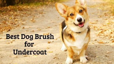 Best Dog Brush for Undercoat