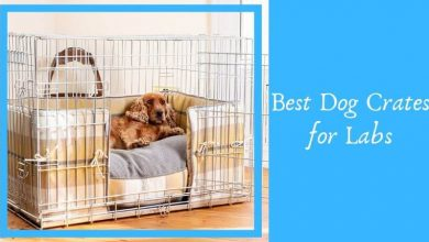 Best Dog Crates for Labs