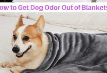 How to Get Dog Odor Out of Blankets: Removal Techniques by Experts