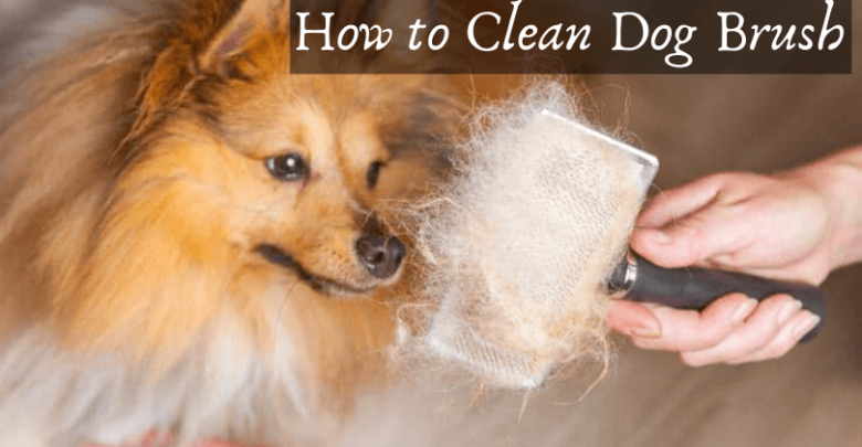 How to clean dog brush