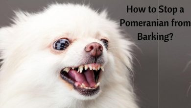How to stop a pomeranian from barking_