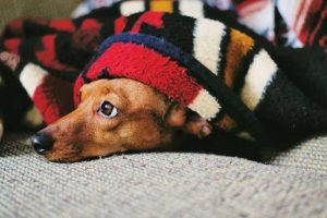 How to Get Dog Smell Out of Blankets