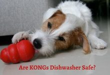Are KONGs Dishwasher Safe