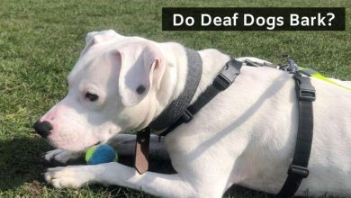 Do Deaf Dogs Bark