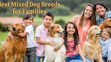 Best Mixed Dog Breeds for Families