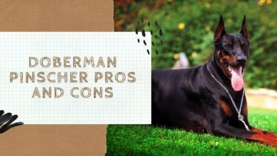 Doberman Pinscher Pros and Cons