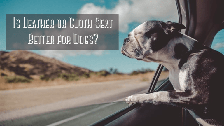 Is Leather or Cloth Seat Better for Dogs