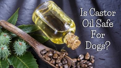 Is Castor Oil Safe For Dogs